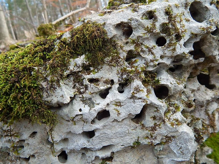 limestone with holes and moss.jpg