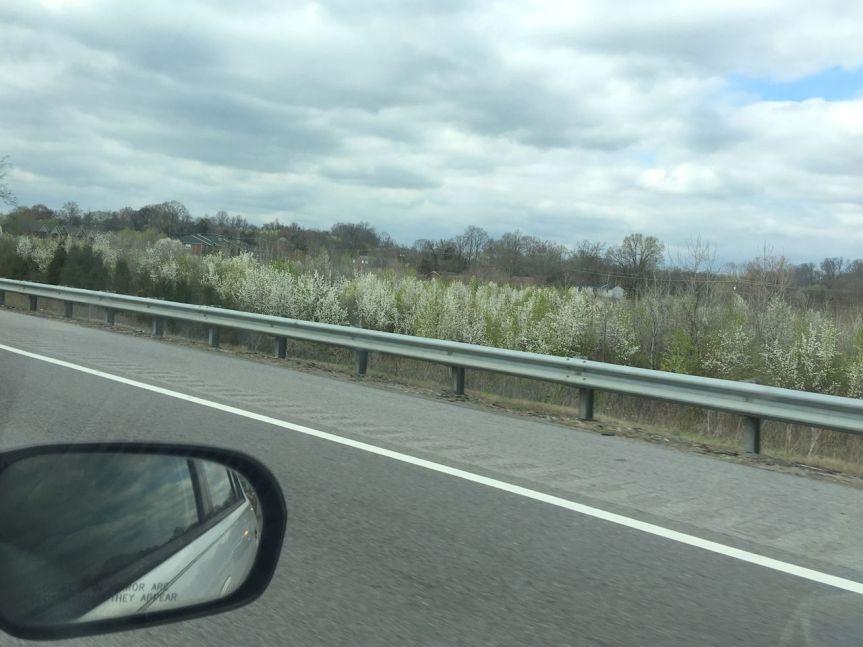 bradford fields