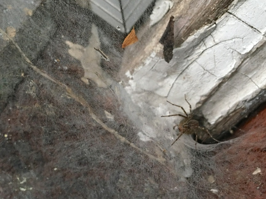 funnel spider window