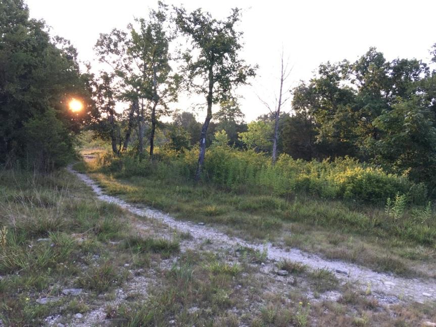 dawn trail