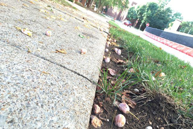 sidewalk-ginkgo