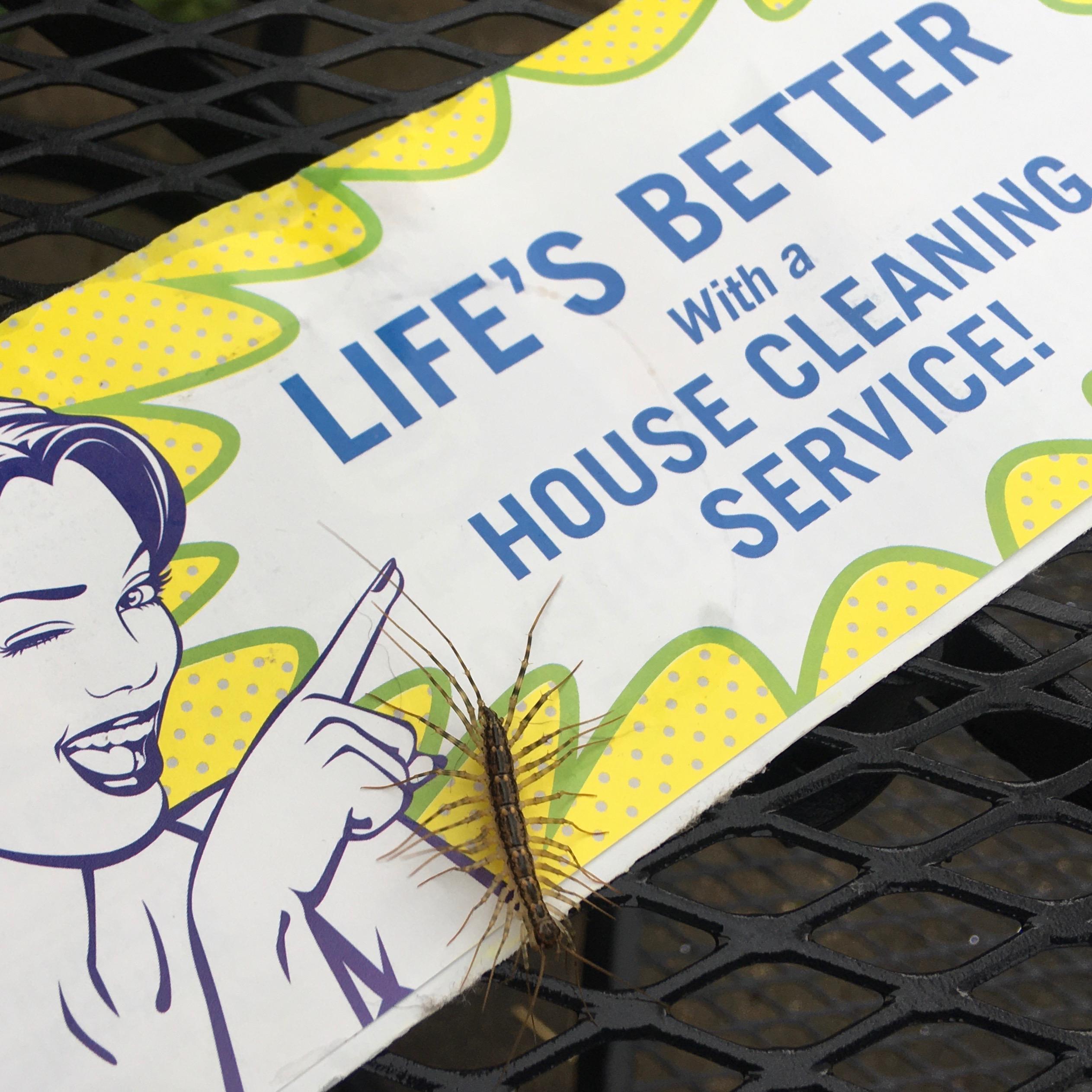 Kitchen Nature: House Centipede