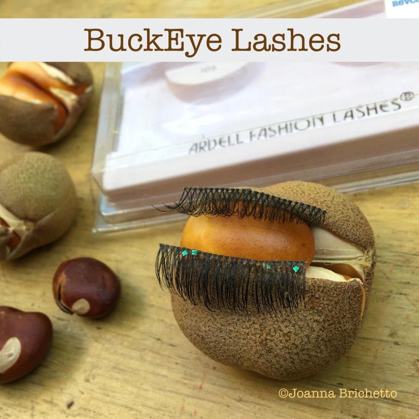 Buckeye lashes